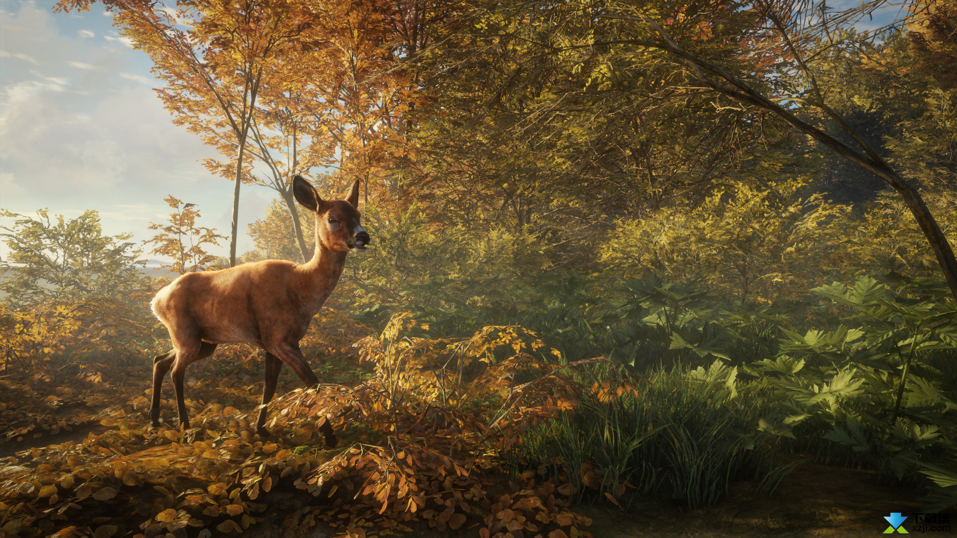 猎人野性的呼唤界面3