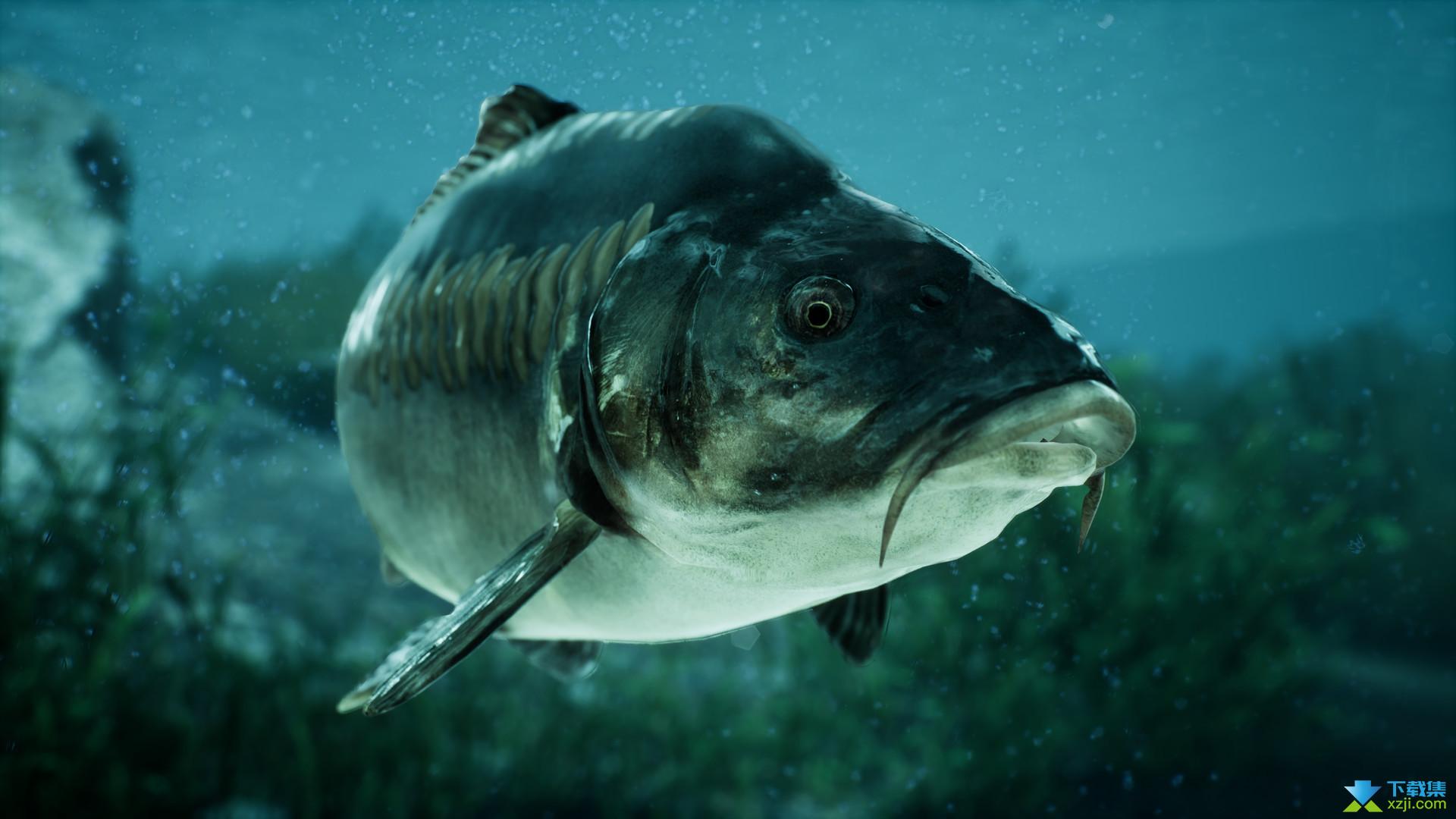 捕获物鲤鱼和大鱼界面2